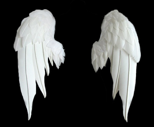 wingssm