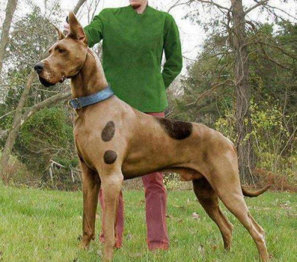 19 ScoobyDoo